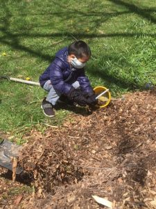 Volunteers mulch trees Lovelace Park Evanston IL